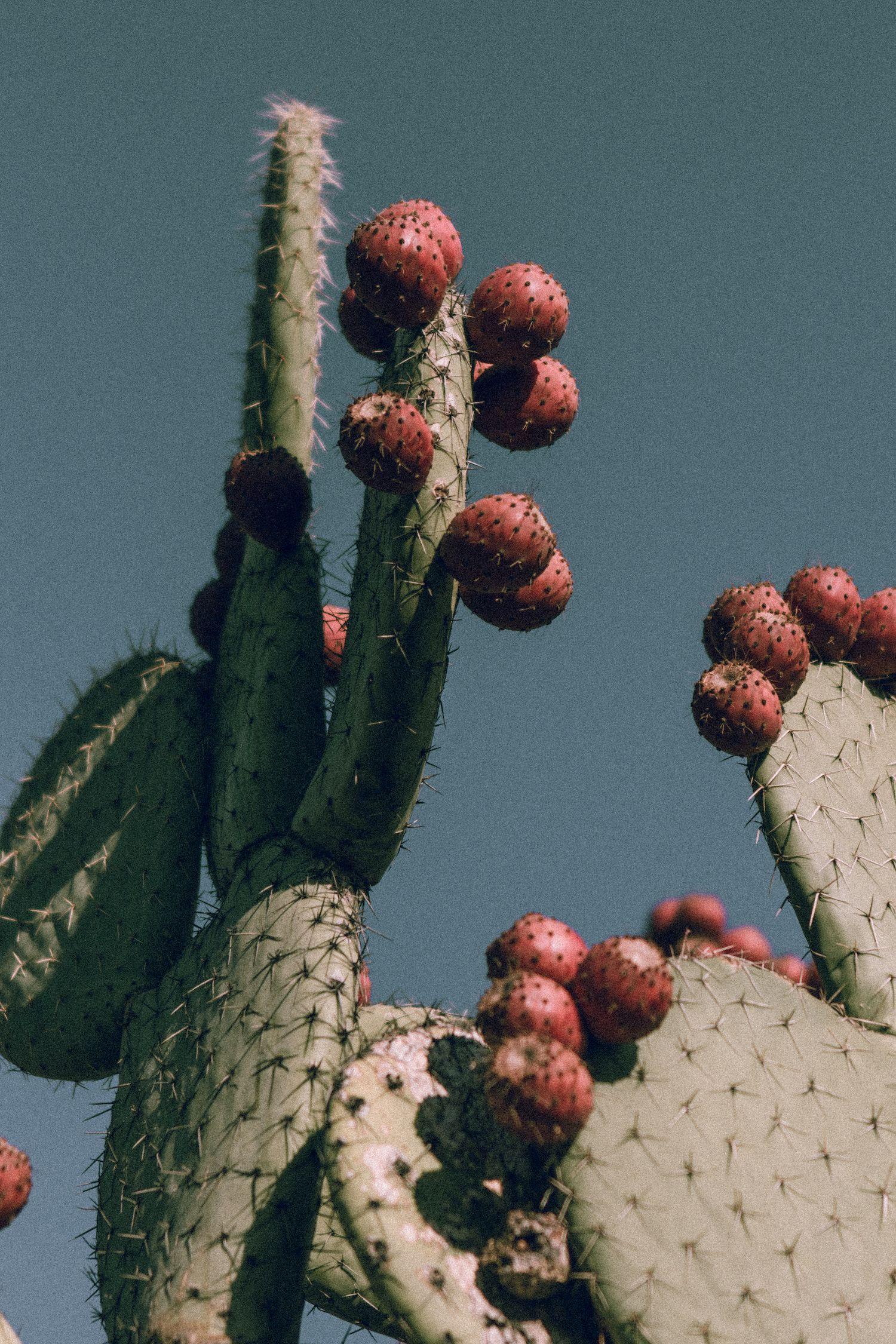 Cactus Decor || Art Prints for Walls || Cactus Wallpaper