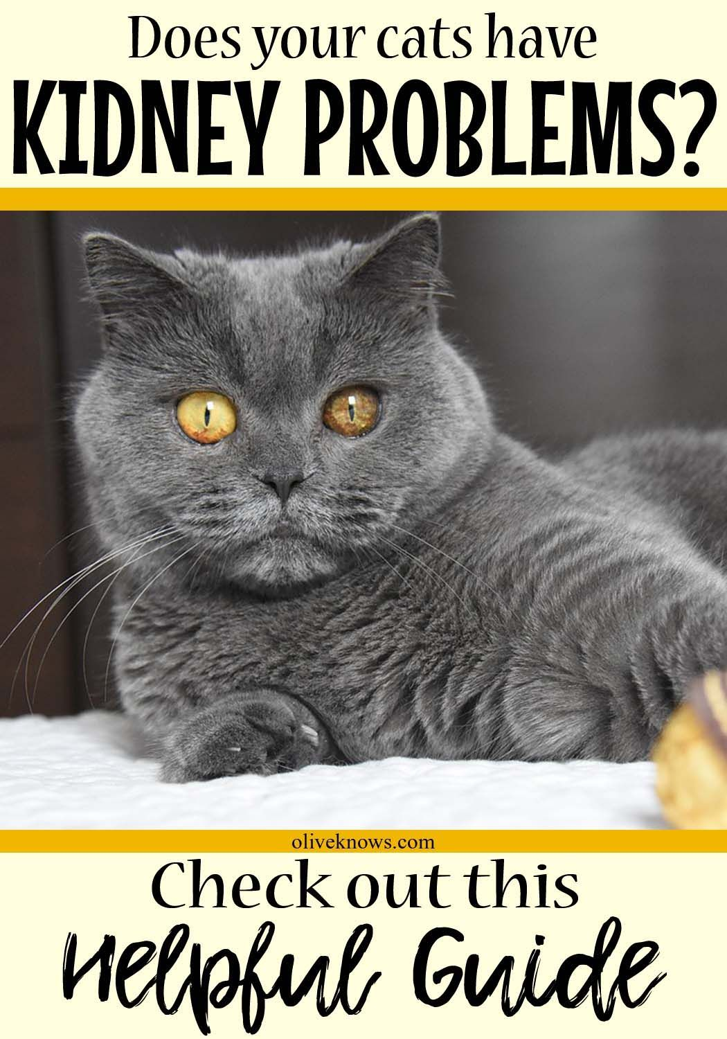 All About Cat Kidney Problems Cat Care Tips Cat Symptoms Cats Cat Health
