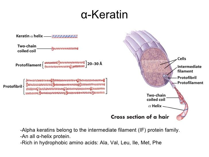 alpha-keratin structure | Hair, Curls, Keratin