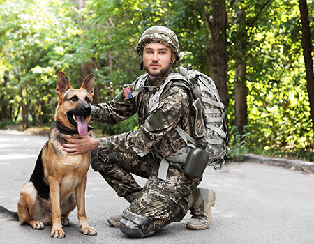 Inspiring Stories Of Military Dogs On Veterans Day Military Dogs