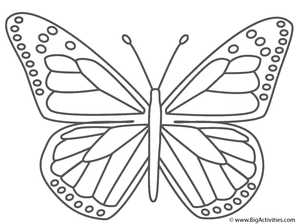 Coloring Page Butterfly Coloring Page Butterfly Outline Butterfly Printable