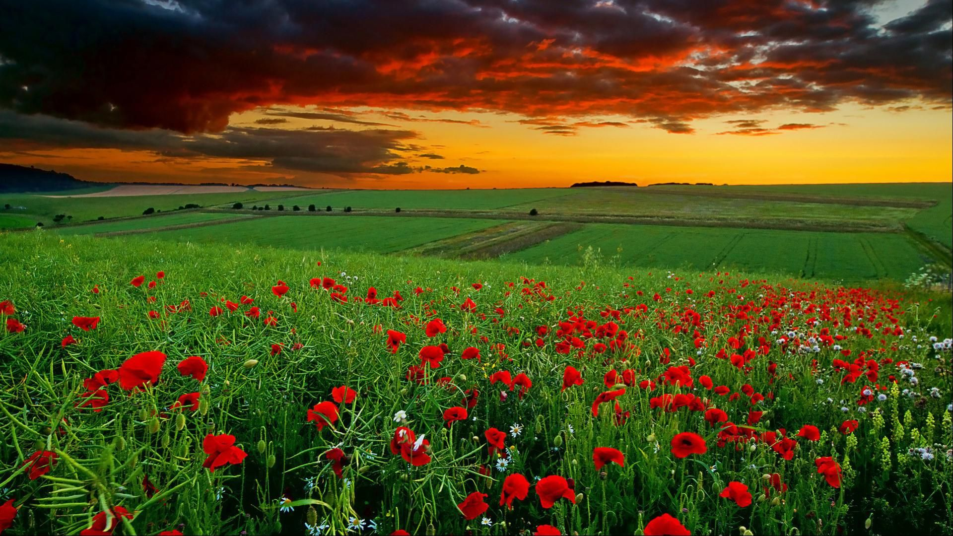 Full Hd Nature Wallpapers 1080p Desktop In Green Landscape With