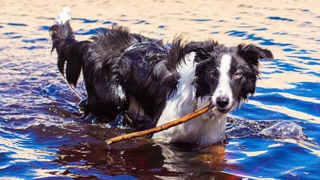 Keiko Rosie Take You To The Beach Border Collie Collie Puppies Border Collie Puppies