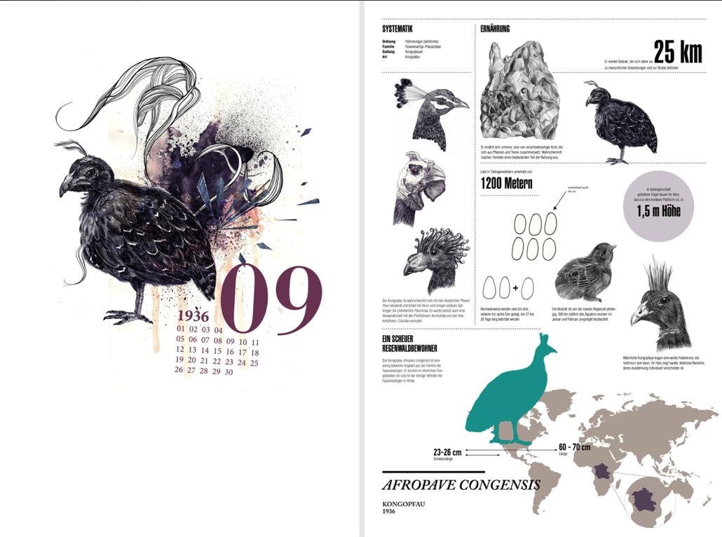 Illustration Calendar Design : Infographic design animal cryptozoology peacock