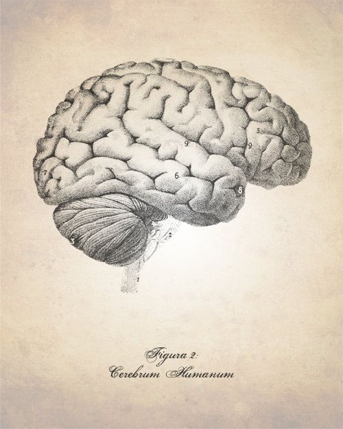 Human Brain Art Print Brain Illustration Art Print Medical