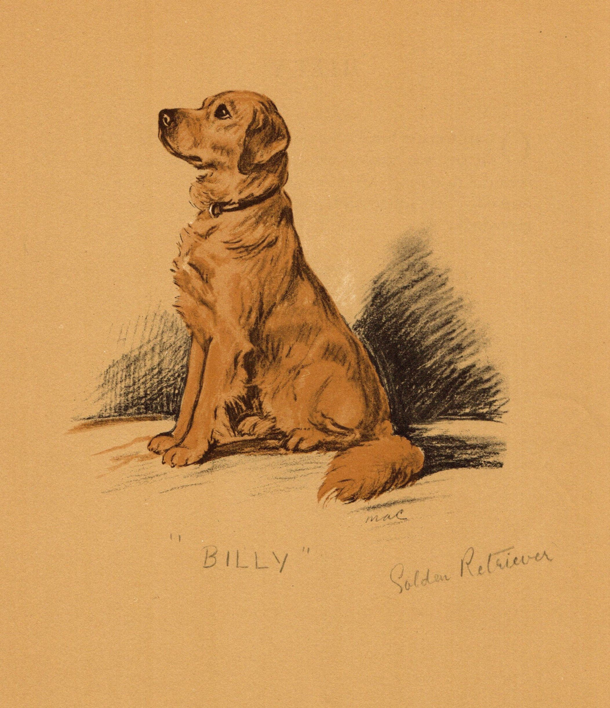 1937 Antique Golden Retriever Dog Print Vintage Lucy Dawson Golden