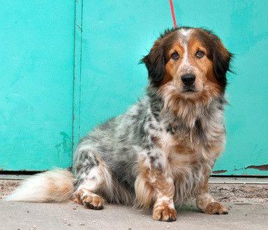 Dog Finder Adopt A Dog Or Cat Near You Basset Hound Mix