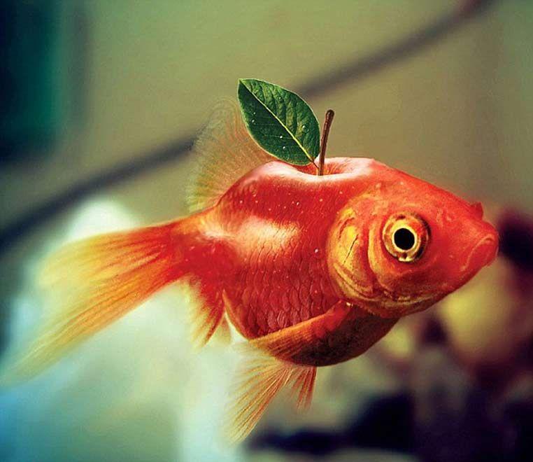 Золотая рыбка картинка смешная