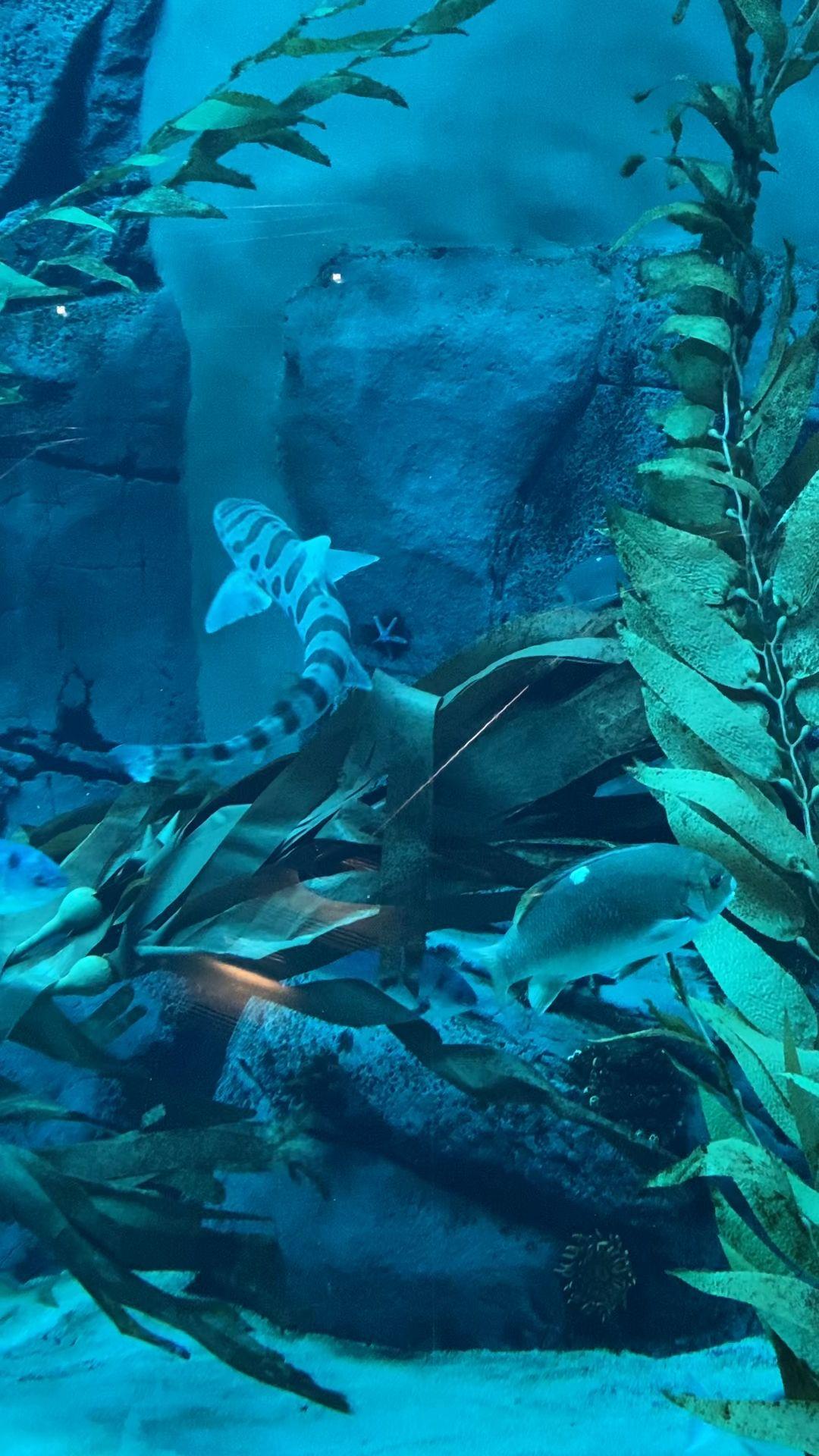 I just had to share how serene it was watching these beautiful underwater swimmers cruise around! #sandiegocalifornia #zooanimals #artwork #serenity #iphonewallpaper