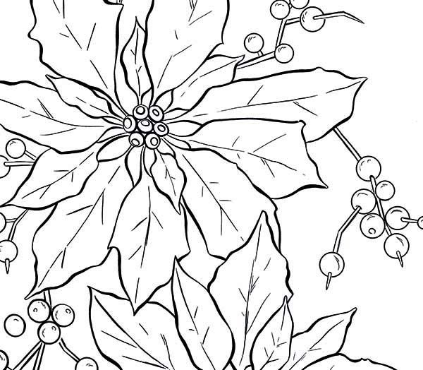 poinsettia  poinsettia fruit coloring page  coloring 4