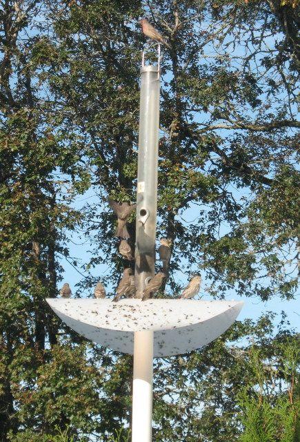 Don S Squirrel Proof Bird Feeder Pole Squirrel Proof Bird Feeders Bird Feeder Poles Backyard Birds Feeders