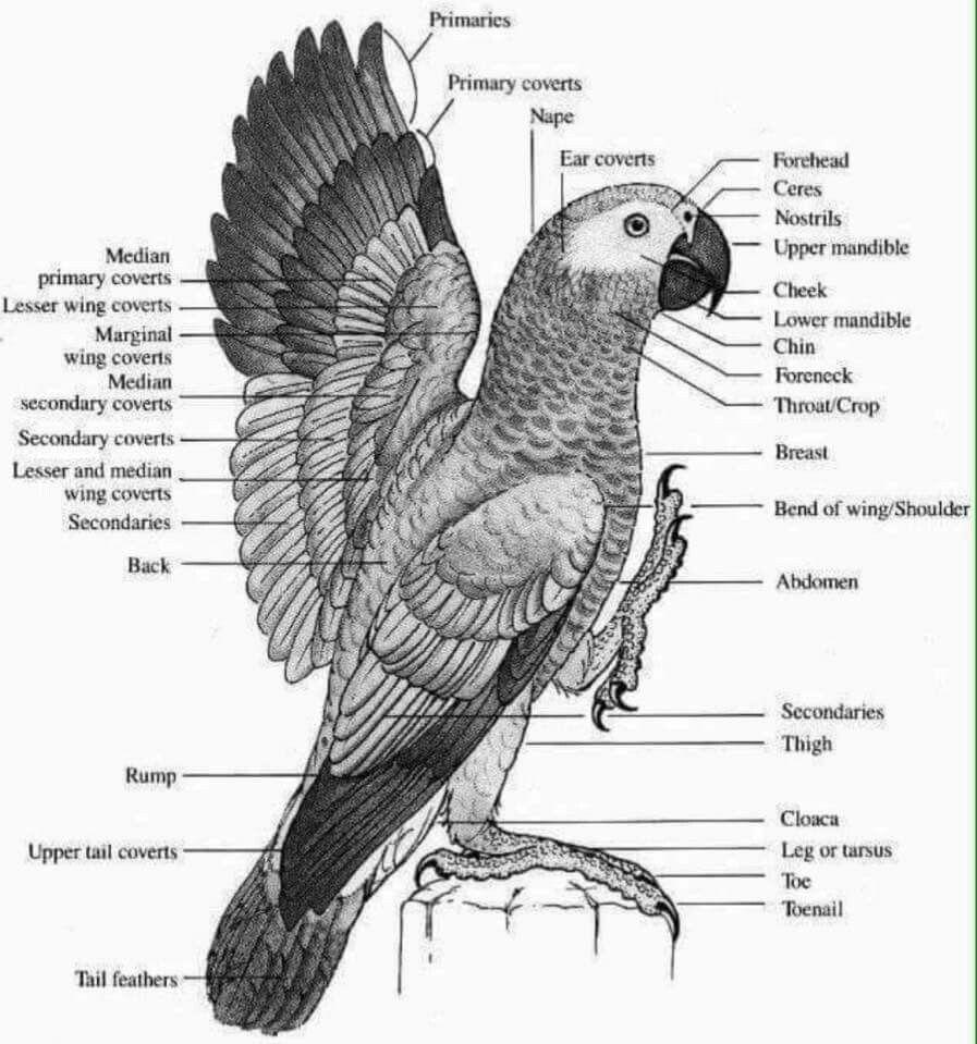 pin de raising parrots 101 en parrot care