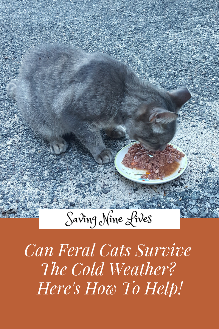 Can Feral Cats Survive Cold Weather? Here's How To Help