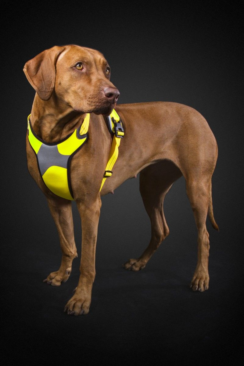 Sturdy, padded harness for dogs on the move. Easy to put