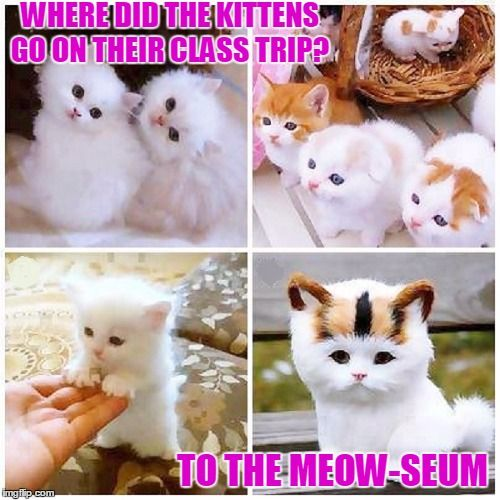 Kitten Garten Where Did The Kittens Go On Their Class Trip To The Meow Seum Image Tagged In Meme Kitty Cats Kitt Kittens Cutest Cats And Kittens Cat Memes