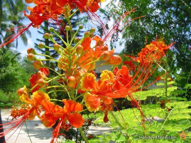 Paradiesische Pflanzen unserer Erde LIEBLINGSBLUMEN - tropische pflanzen im garten