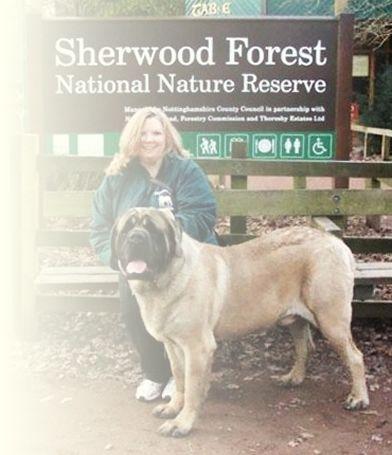 Sherwood Mastiffs Mastiff Breeding Showing Mastiff Breeds
