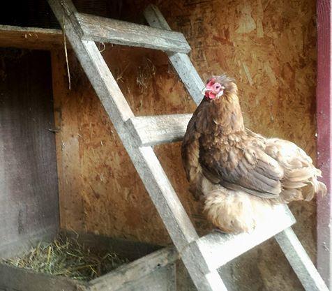 Fresh Eggs Daily®: A Week in Farm Photos - September 14th - 20th