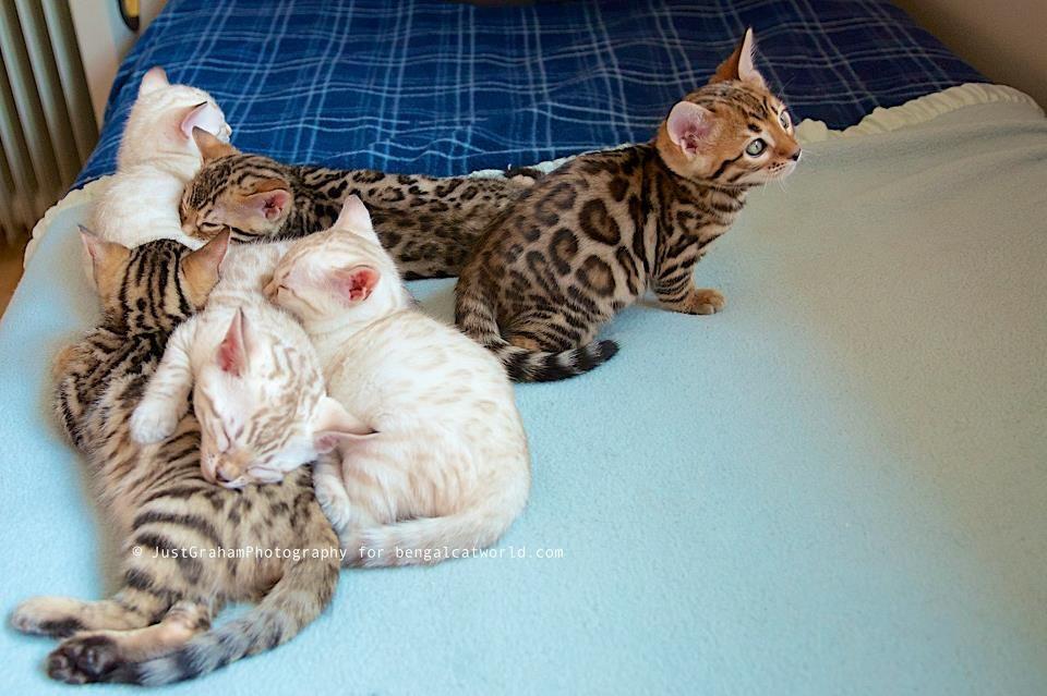 Epingle Par Aarti Khandelwal Sur Love Cats Chats Adorables