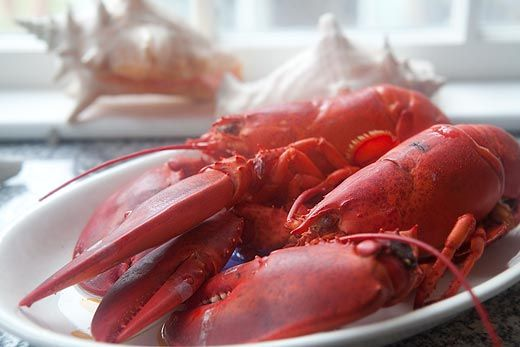 A visual guide with instructions to boiling and eating fresh New England lobster.