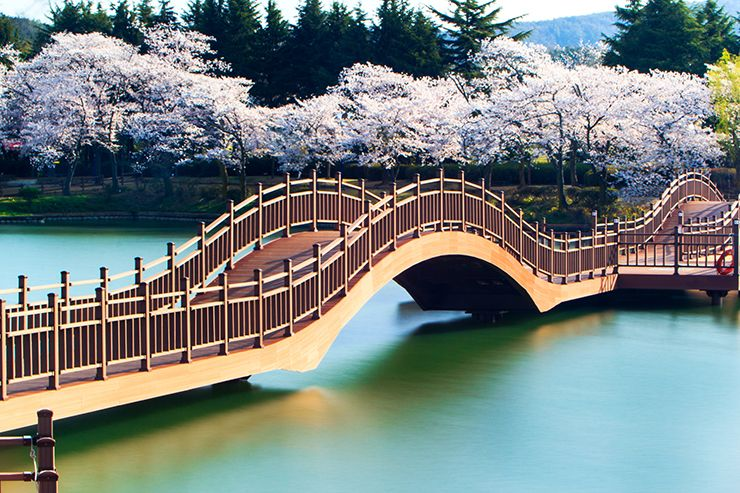 Gyeongju Is A Great Place To See Cherry Blossom In South Korea South Korea Photography Beautiful Places To Visit South Korea Travel