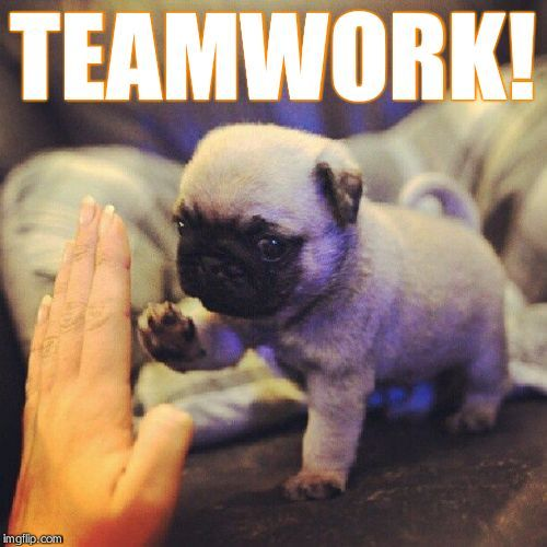 Funny Memes About Teamwork Google Search Dogs