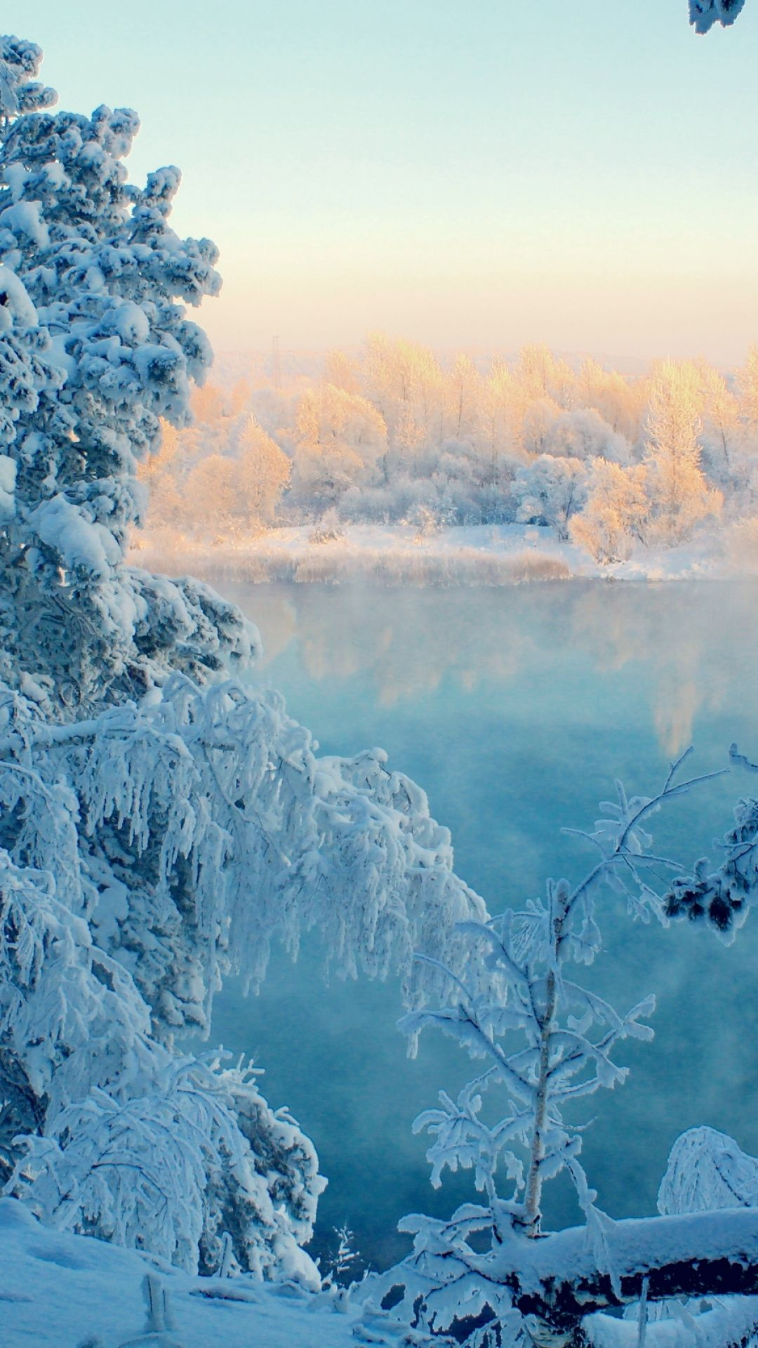 1080x1920 Wallpaper Winter Snow Trees Frost Branch Severity December Winter Landscape Nature Nature Pictures