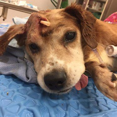Our Partners At Second Chance Rescue Just Got To The Nyc Animal