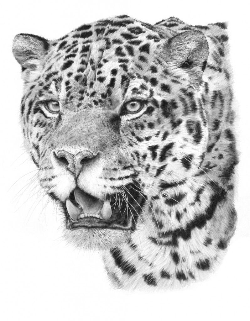 jaguar drawing - photo #15