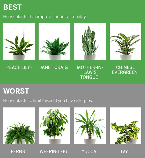 healthy houseplants your stuffy nose will love plants of benefits zimmerpflanzen pflanzen. Black Bedroom Furniture Sets. Home Design Ideas