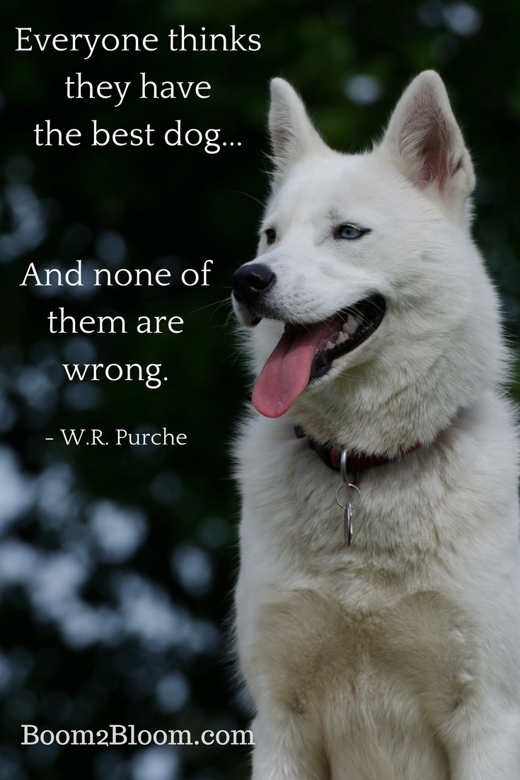 Animal Quotes | Animal Quotes Heart Soul Mates Post Your Blog All Niche Dog