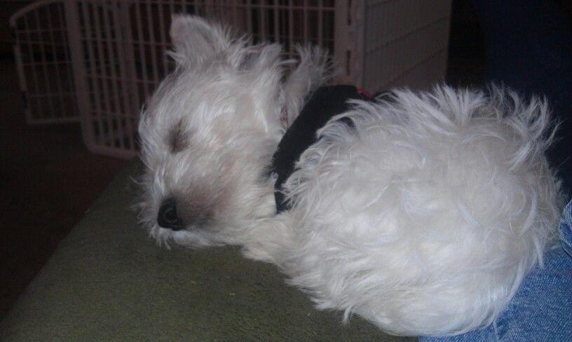 Abby having a snooze