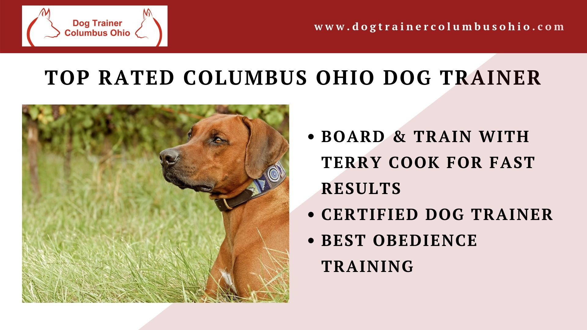 A Top Rated Columbus Ohio Dog Trainer Terry Cook Offers Various