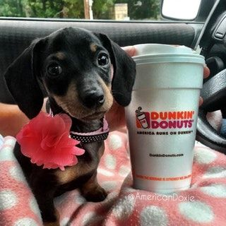 Weenies Coffee The Essentials Dachshund Weenie Bums