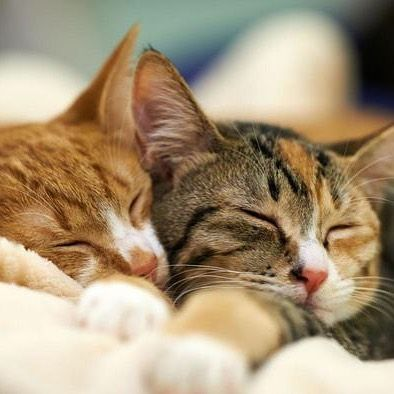 What percentage of their day do cats spend sleeping? The