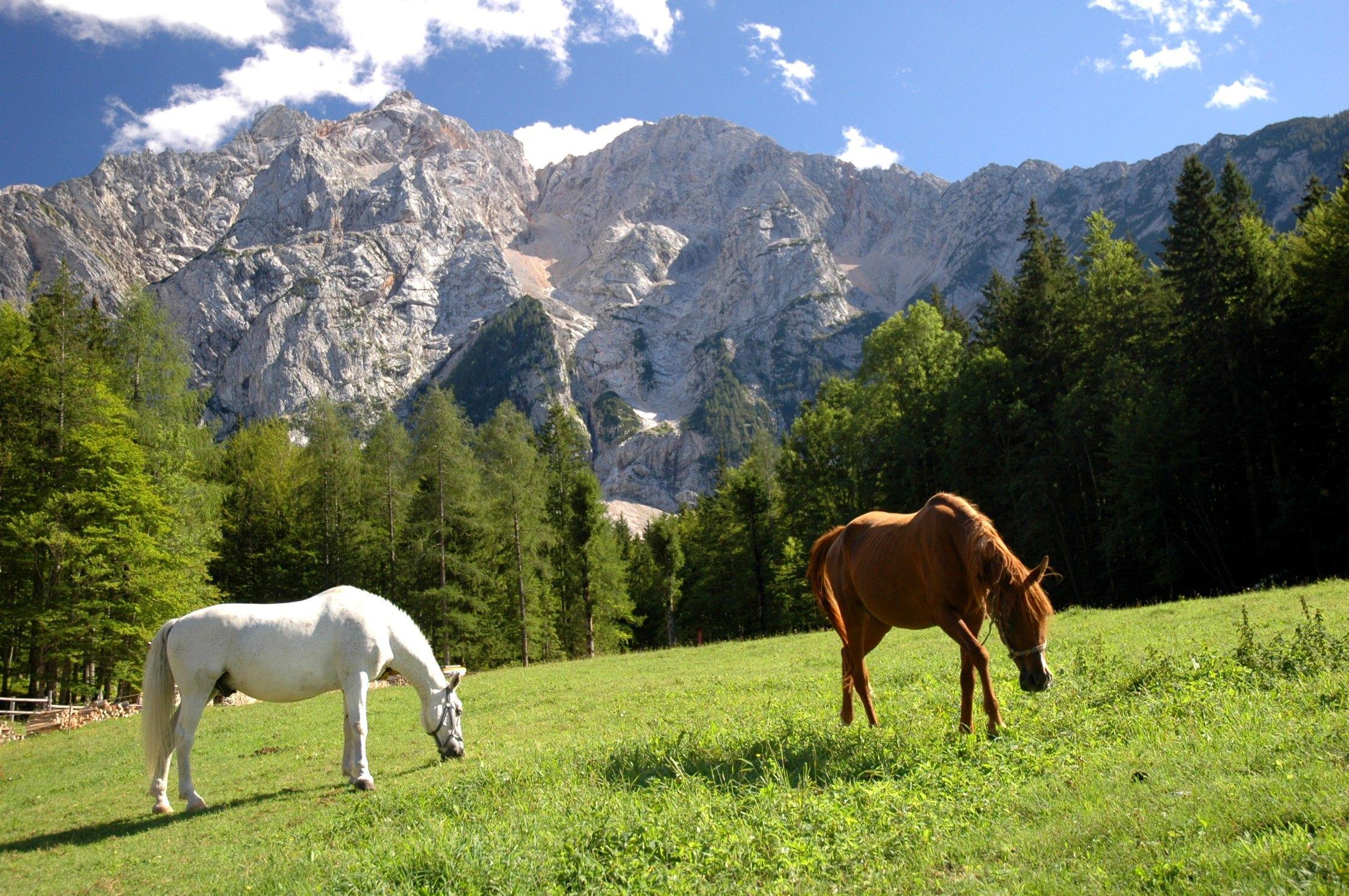 Horses and peaks, Jezersko, Slovenia   http://fieldnotesfromfatherhood.com/2012/09/29/jezersko-slovenia-fantastic-organic-slovenic-lovefest/