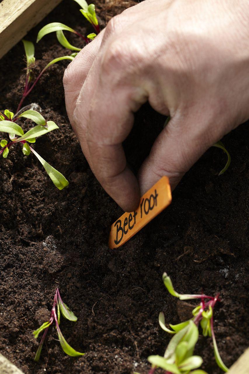 Rote Bete selbst anbauen • Pflanzen Tipps & Tricks • 99Roots.com