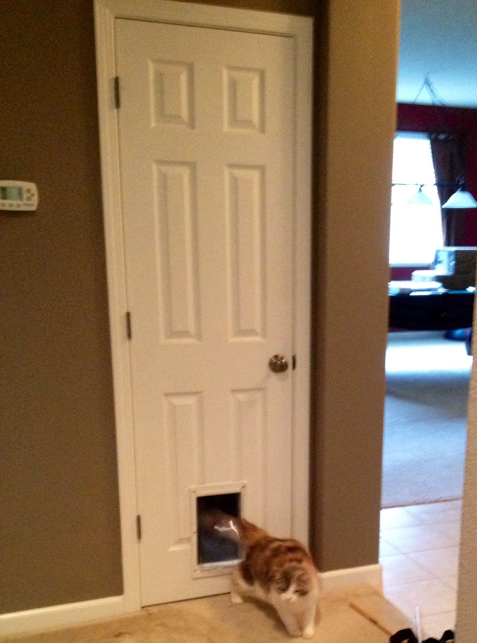Cat & Clever cat idea | Put a doggie door/cat door on a small closet ... Pezcame.Com