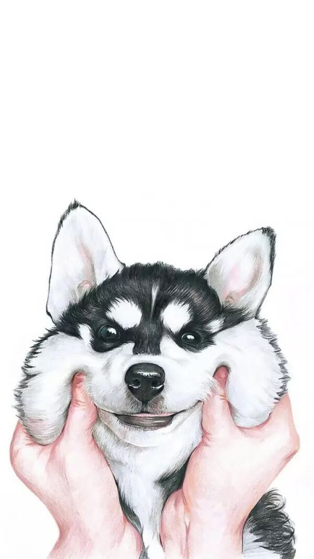 Husky Puppy Wallpaper Background Dog Wallpaper Iphone Wallpaper Iphone