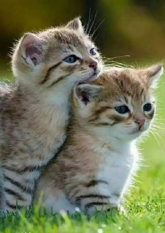 Cute kitties chilling together outside ️ #socute #kitties ...
