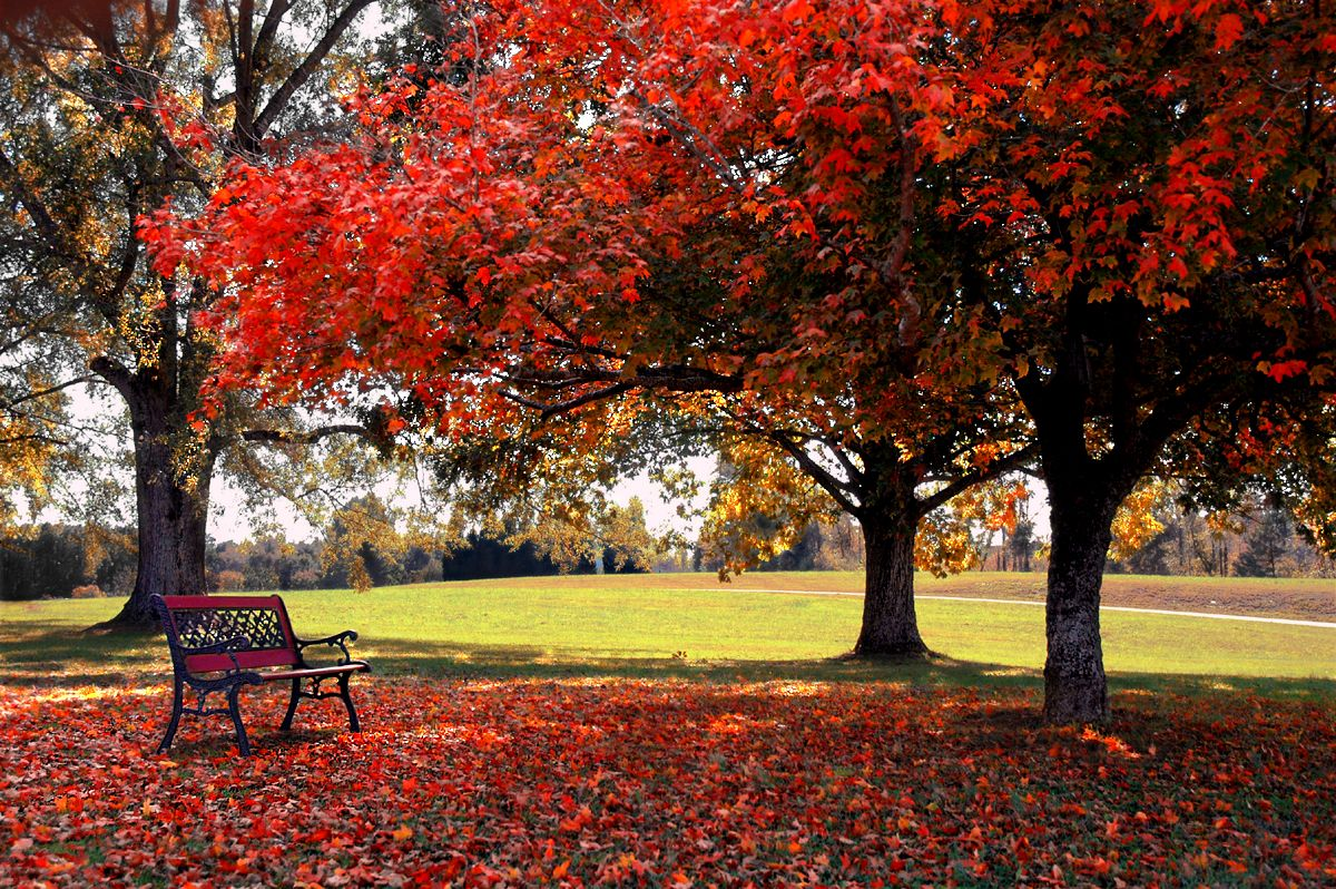 Autumn Pictures For Desktop - Bing Images | A Photography idea ...