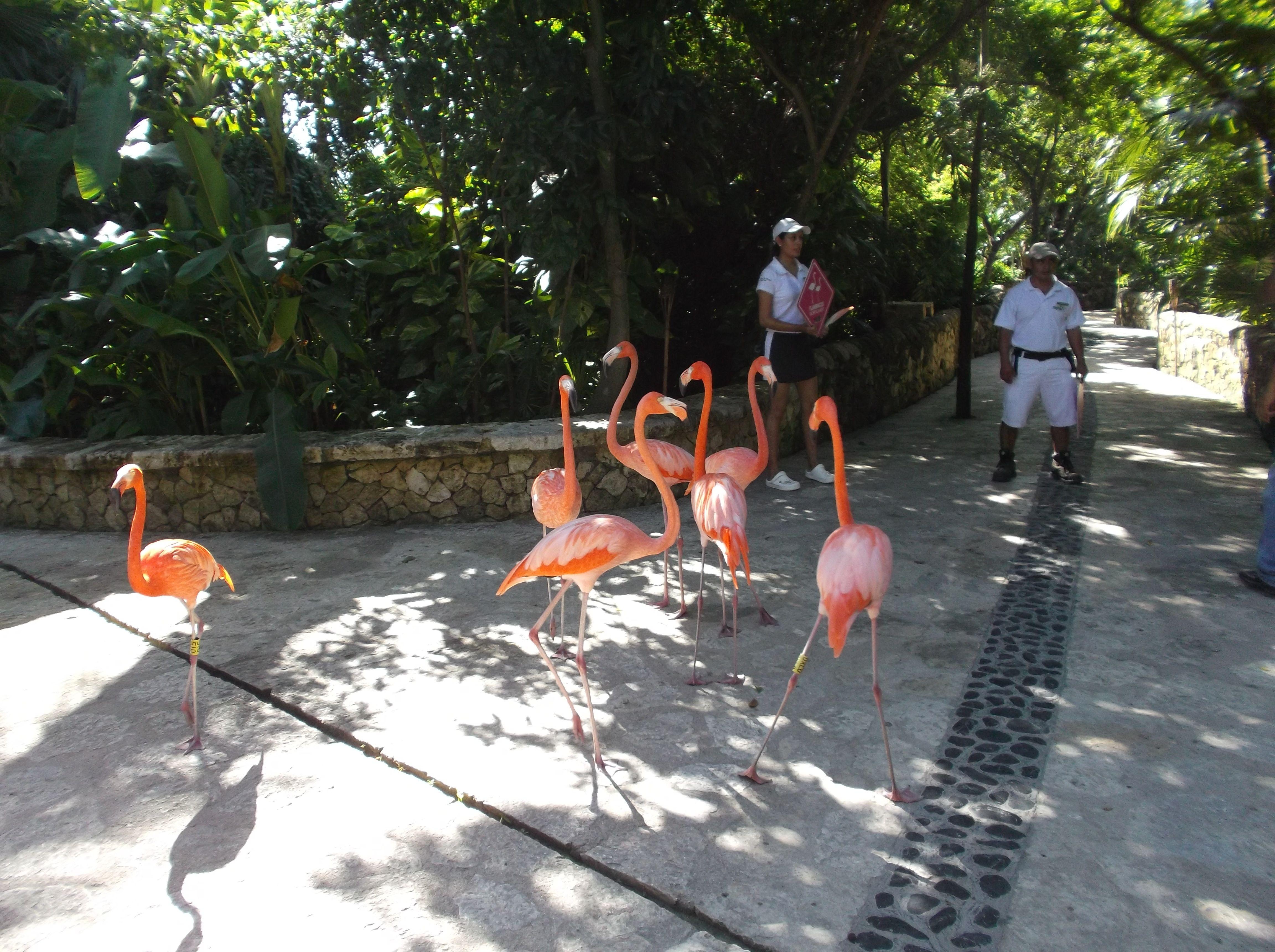 Flamingos !!!! que lindos