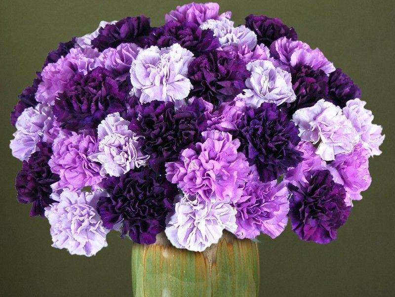History And Meaning Of Carnations Purple Carnations Purple Carnation Bouquet Birth Flowers