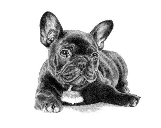 The Black Frenchie Sketch French Bulldog Dog Cute French