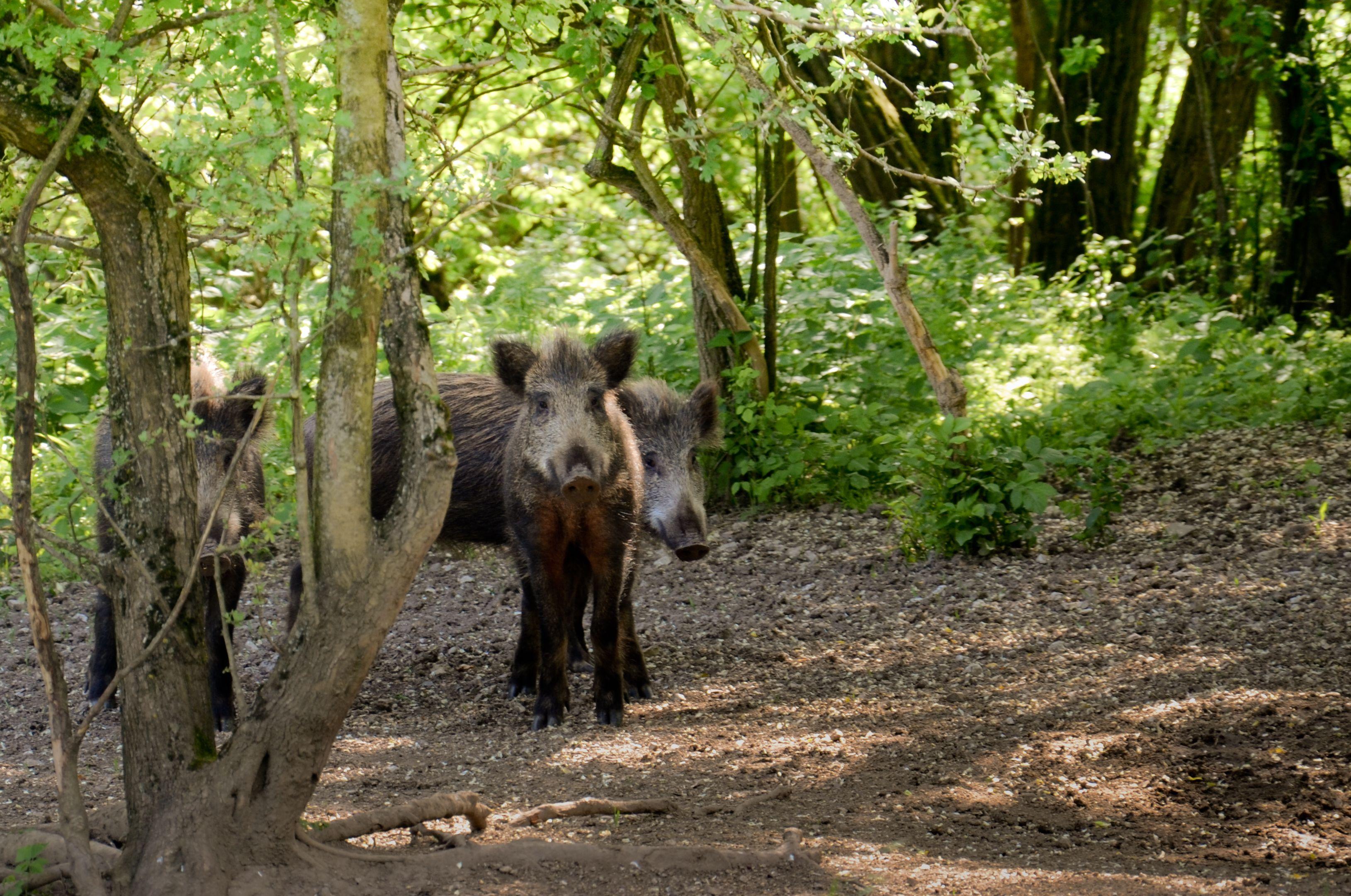 Slovakian animals - Faha.sk #animals #slovakia #slovensko