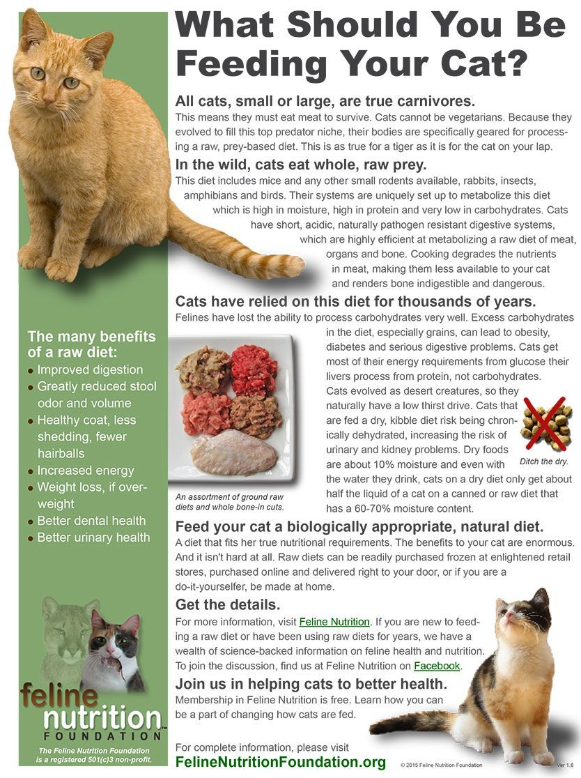 Pin By Laura On Kitten 1o1 In 2020 Cat Nutrition Cat Care Cats