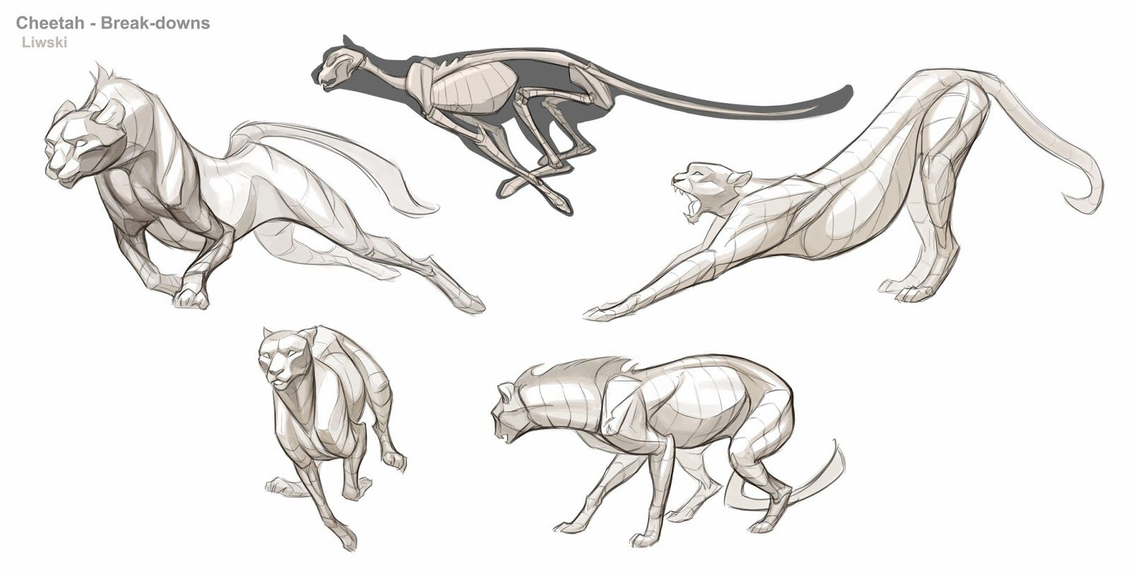 Image result for anatomy of a cheetah, I think the pose of the one ...