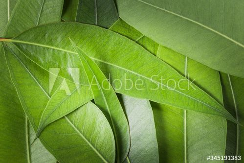 Stock Image: green eucalyptus leaves on wooden background, top view
