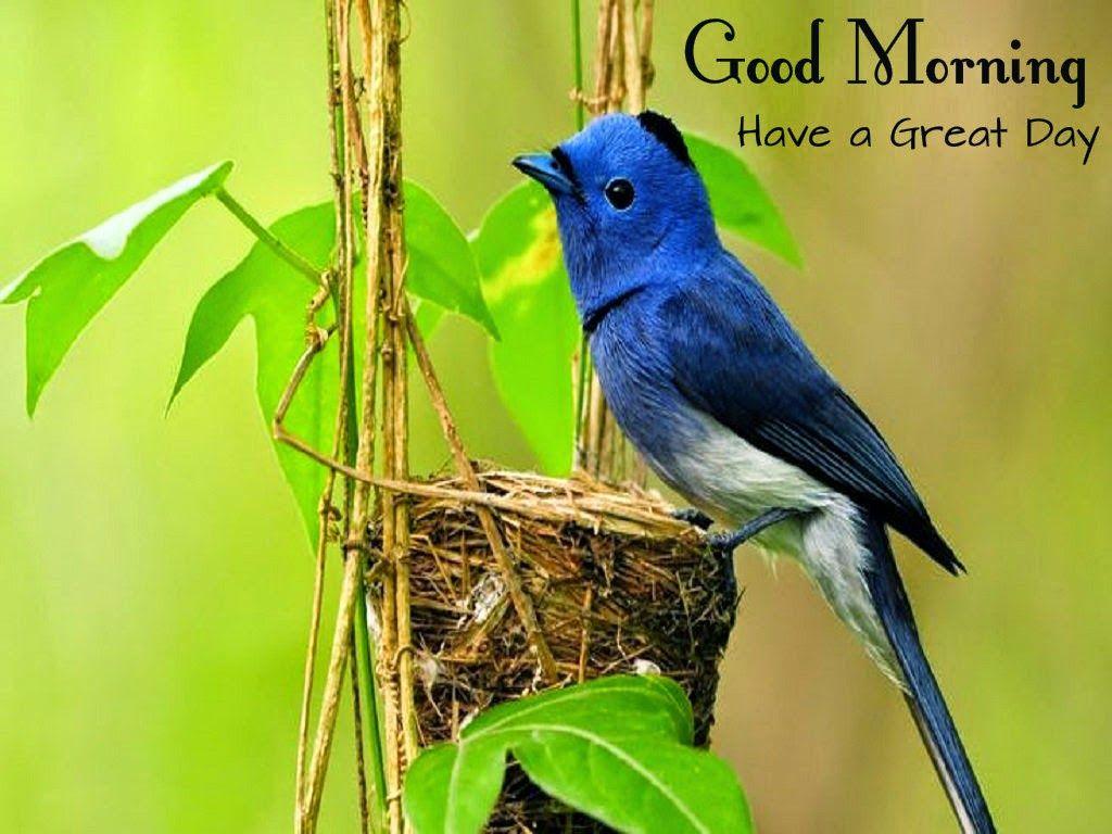 Paradise bird morning greetings good morning pics pinterest paradise bird morning greetings kristyandbryce Gallery