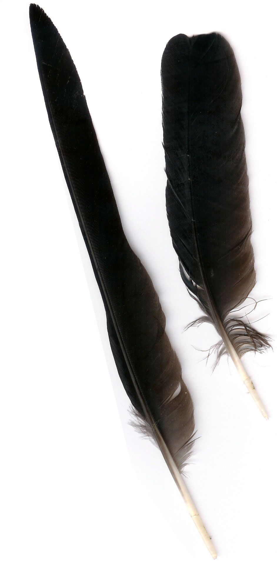 Feast for crows crow feather table decorations stuff feast for crows crow feather table decorations buycottarizona Gallery